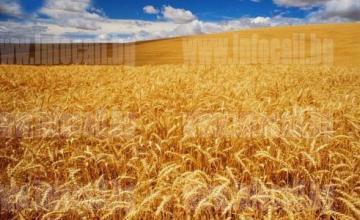 Арендуване на земеделска земя в Езерче-Цар Калоян - Терас 3 ООД