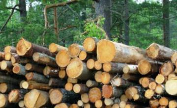 Дърводобив и дървообработване в Добрич - Дървен материал Добрич