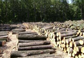 Дърводобив в Смядово-Шумен - Дърводобив Смядово