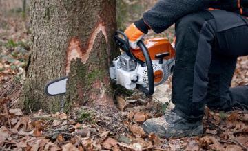 Дървообработка в Плевен - Ракита - Братя Райнови  ООД