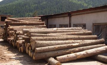 Добив и обработка на дърва в Сърница - Дърводобив Сърница