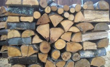 Добив иглолистна и широколистна дървесина Чирпан
