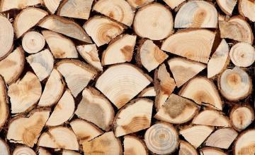 Добив на дървен материал в Белица-Благоевград  - Георги Пенчов ЕТ