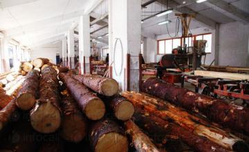 Добив объл дървен материал в Чепеларе - Тоники-Марияна Беловодска ЕТ
