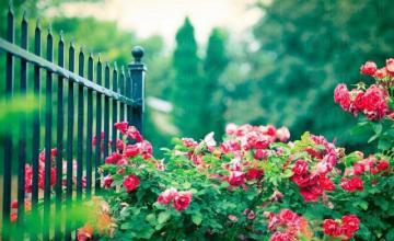 Изграждане на градини и настилки в двора в София - АЛД Гардън  ЕООД