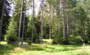 Изкупуване гори за сеч Варна - Палети Варна