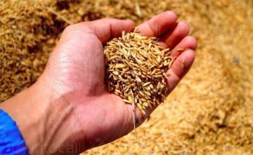 Изкупуване селскостопанска продукция в Силистра - Агровин ЕООД
