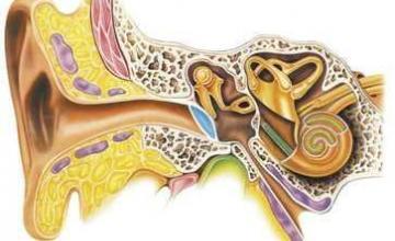 Консултация при намален слух в Бургас-Зорница - доктор Татяна Михова