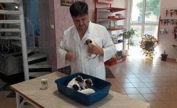 Лабораторни изследвания домашни животни в София-Люлин - Orion
