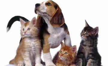 Лечение домашни любимци в София - Манастирски ливади - Ветеринарен кабинет Доктор Перчинска
