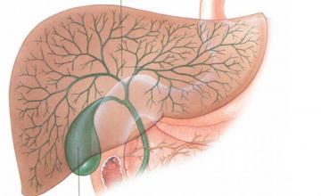 Лечение заболявания на жлъчния мехур и черния дроб в Шумен - Доктор Йоанна Енчева