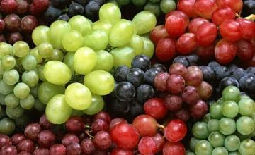 Лозарство и винарство в Силистра - Агровин ЕООД
