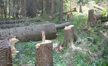 Намаляване риска от снабдяване с незаконна дървесина в София - Сертификация дърводобив