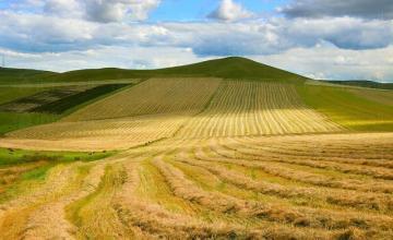 Обработка и арендуване на земи в Кнежа, Плевен, Червен бряг