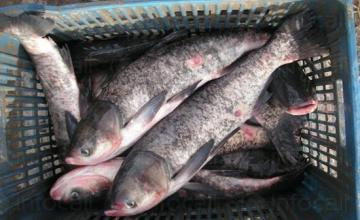 Организиране на риболов в Червен бряг