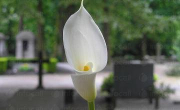 Организиране погребения Враца - Погребална агенция Йована