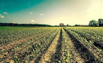 Отглеждане и събиране на зърнени култури в Долни Дъбник - Земеделски производител Долни Дъбник