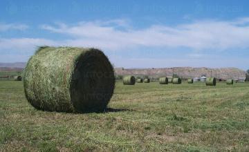 Отглеждане на кориандър и люцерна в Сливен - ЗКПУ Речица 92
