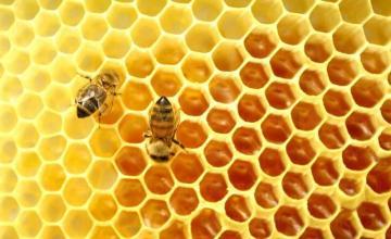 Отглеждане на пчели в Лесичово-Пазарджик - Теди 71 - Теодора Кичукова