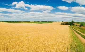 Отглеждане на пшеница - Селскостопанска продукция Левски