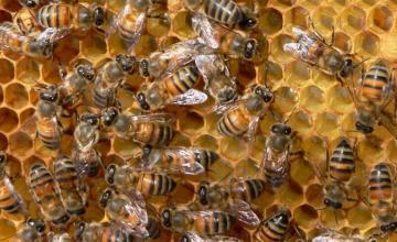 Пчеларство Шумен и Варна - ИНВЕСТ КОНСУЛТ СТРОЙ 2016 ЕООД