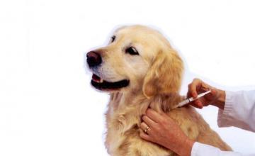 Поставяне ваксина на кучета и котки Казанлък