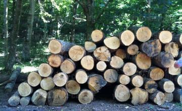 Продажба дърва за огрев в Дулово - Дърводобив Дулово