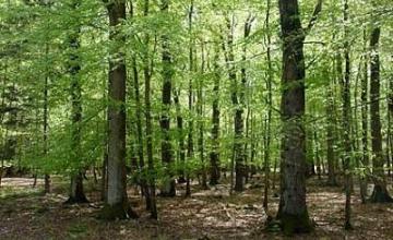 Продажба гори - Агенция за недвижими имоти Търговище