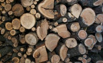 Продажба на дърва за огрев в Костинброд