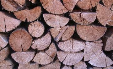 Продажба на дърва за огрев в област Ямбол