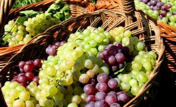 Продажба на грозде в Любимец-Хасково - Селскостопанска продукция Любимец