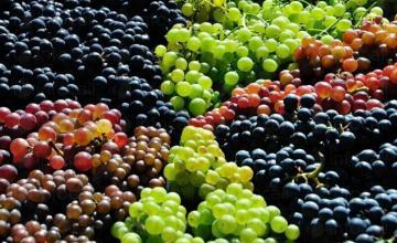 Продажба на грозде в Свищов