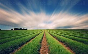 Продажба на селскостопанска продукция в Добрич - МИРЕЛА КИРОВА РАДЕВА-ДОНЕВА ЕТ