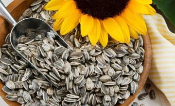 Продажба на семена за технически култури в Долни чифлик-област Варна - Агрощил България