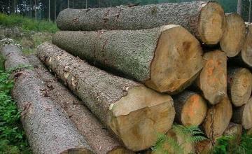 Продажба на трупи в Троян - Фирма за дървопреработка в Троян