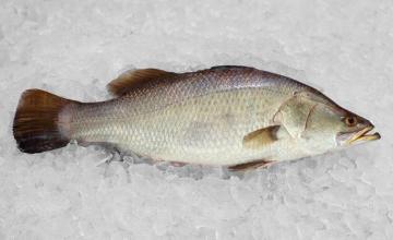 Продажба на замразена и охладена риба в София