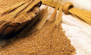 Продажба на зърно в Любимец-Хасково - Селскостопанска продукция Любимец