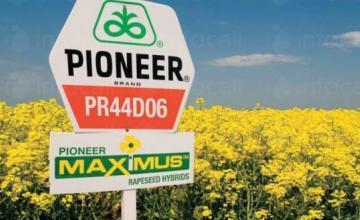 Продажба рапица  - Пионер Семена България