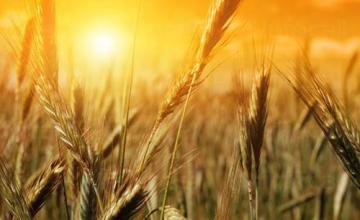 Продажба земеделска продукция в Разград - Земеделска продукция Разград