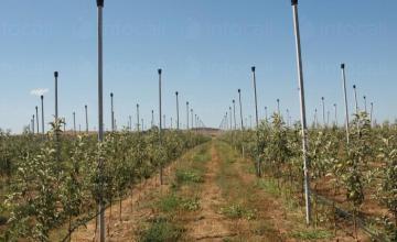 Проектиране градини и лозя в Бургас - Мибу 17