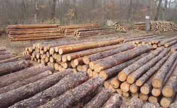 Производство дървен материал в Дулово - Дърводобив Дулово