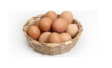 Производство и износ на яйца Павликени