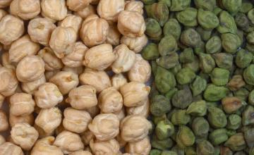 Производство и пакетаж на леблебия във Вълчи дол-Варна