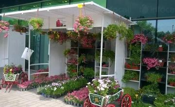 Производство на градински цветя Бургас - Разсадник Иванови ЕООД