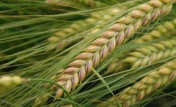 Производство на селскостопанска продукция в Баня-Карлово - Кооперация Надежда
