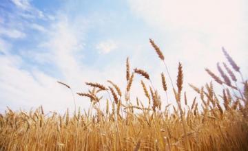 Производство на селскостопанска продукция в Бургас
