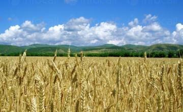 Производство на селскостопанска продукция в Хърлец-Козлодуй