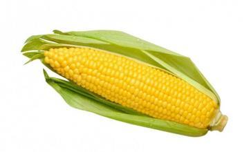 Производство на царевица в община Свищов - ППК Възраждане Морава