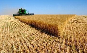 Производство на зърнени култури в Търговище - ЕТ Васико - Кольо Василев