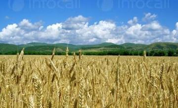 Производство на земеделска продукция в община Силистра